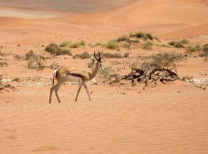 Location voitures low cost en Namibie